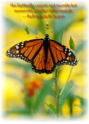 123friendster.com - more butterfly quotes comments