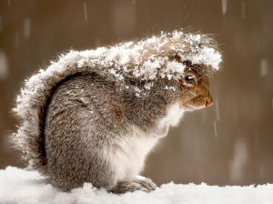 Picture of a squirrel in a snowstorm