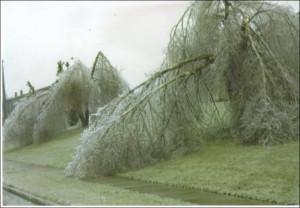 Lexington Kentucky Ice Storm Feb 2003 Image