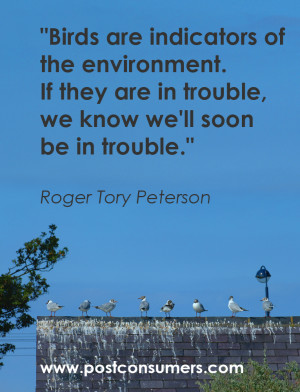 inspirational quotes birds