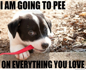 am going to pee on everything you love meme