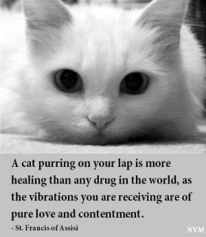 Purring cat quote by St. Francis of Assisi: Happy Kitty, Cat Quotes ...