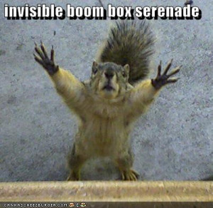 funny squirrels. Squirrels come in all colors