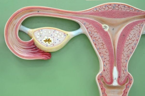Induction of puberty by autograft of cryopreserved ovarian tissue