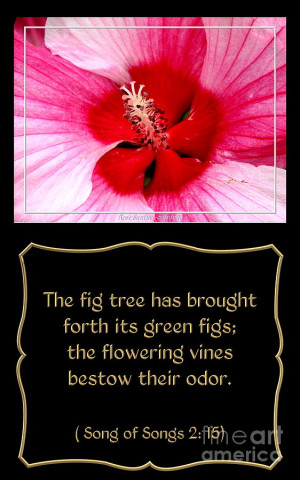 Hibiscus Closeup With Bible Quote From Song Of Songs Photograph