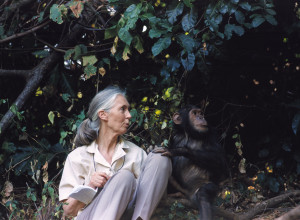 Jane Goodall With...