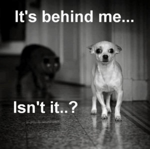 Funny Dogs And Cats By Nuts And Funny Picture Of The Dogs In Grey ...