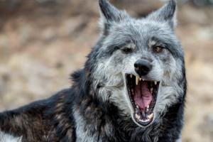yawning28-640x428.png