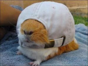 Funny Hamster In Cap