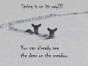 spring-is-here2.jpg