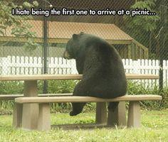... Yogi Bears, Baby Animal, Picnics Tables, Picnics Baskets, Baby Bears