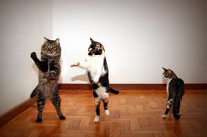 Dancing cats