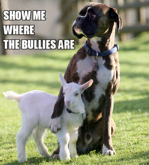bullies, cute, dog, lamb