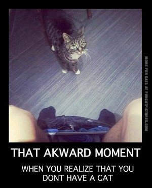 funny-cats-that-awkward-moment-when-you-realize-you-dont-have-a-cat