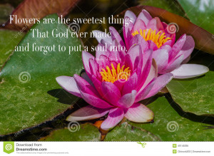 Garden lilies sitting on large green lily pads with a wonderful quote ...