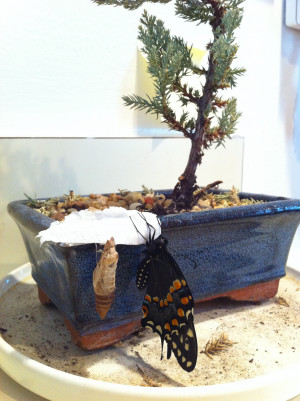 Image search: trees quotes bonsai miracle albert einstein life HD ...