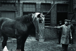 courage of the real War Horses: The eight million forgotten animals ...