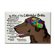 Chocolate Lab Brain Rectangle Magnet for