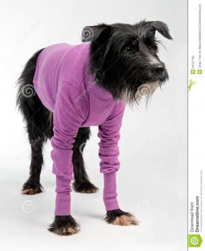 Funny Dog Wearing Sweater White Background