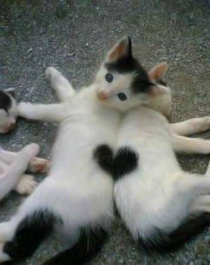 ... one heart cute romance love cats animals pets sweet relationship love