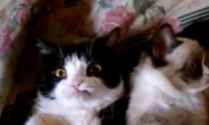 Tard The Grumpy Cat And Pokey