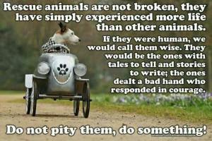 Rescue Animals...