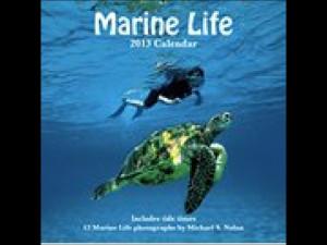 Marine Life: Quotes
