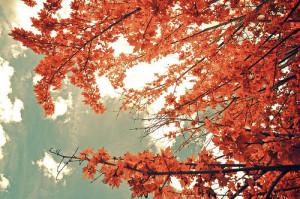 autumn-color-fall-leaves-photography-Favim.com-329858.jpg