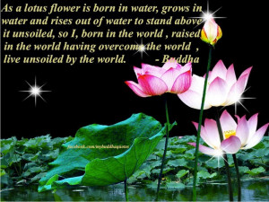 Lotus Flower Meaning Quotes: Buddha's Dharma : As A Lotus Flower Is ...