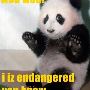 cute panda quotes cute panda quotes cute quote
