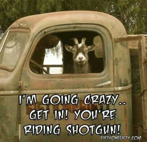 ... Quotes, Riding Shotguns, Crazy, Funny, Letting Going, Funnies Stuff