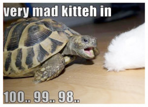 Cute Turtle Pictures Quotes Funny turtle picture, very mad