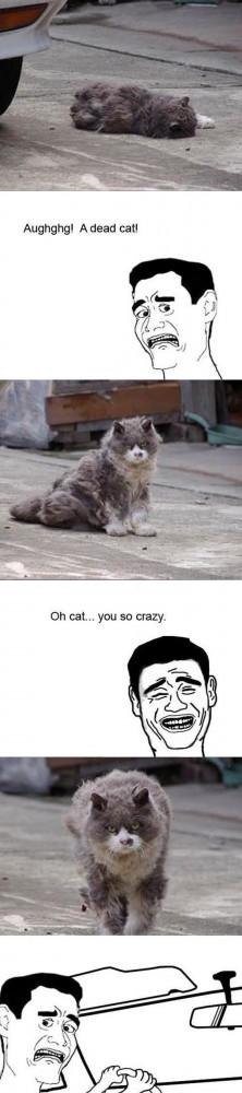 Funny Dead Cat