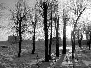 winter trees + quotes