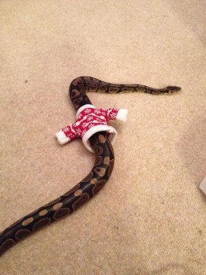 Sweater for a snake…