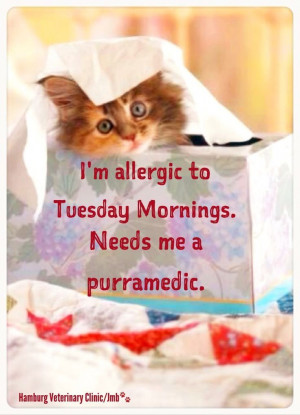 ... Tuesday, Tuesday Quotes, Morning Quotes, Quotes Happy, Quotes Quotes