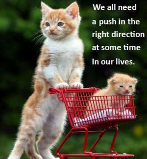 ... direction at some time in our lives. Life Motivational Cute Cats Quote