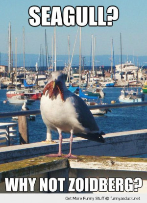 seagull bird animal eating starfish why not zoidberg futurama tv funny ...