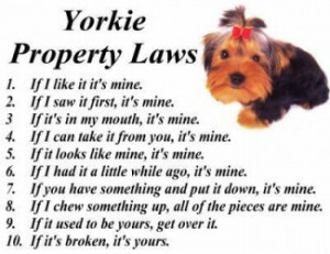 Fun Tidbits, Poems, Pictures, Software for the Yorkie Lover..Enjoy!