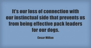 Cesar Millan Quotes