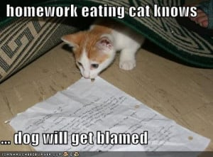 Funny_pictures_homework_eating_cat_Funny_cats_and_dogs_pics-s438x324 ...