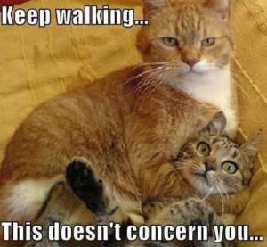 funny cat memes tumblr funny cat memes tumblr funny cat memes tumblr