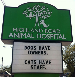 Another Vet With a Great Sense of Humor (26 pics) | Little White ...