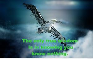 Flying bird wisdom quote with art