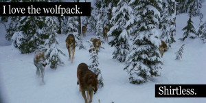 Funny Wolf Pack