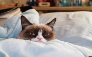 Grumpy Cat No Wallpaper