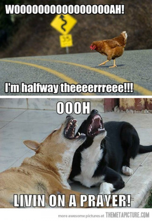Funny photos funny chicken dogs singing
