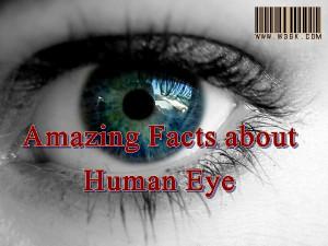 eye,human eyes,facts