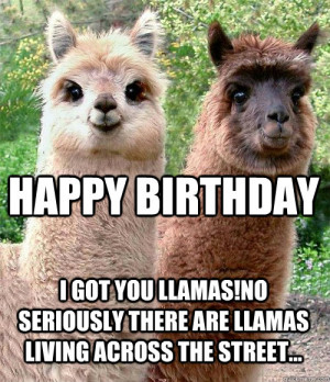 Llama Happy Birthday Meme