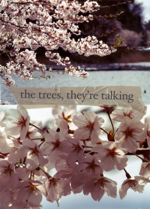 cherry blossom, flowers, lines, pink, quote, trees